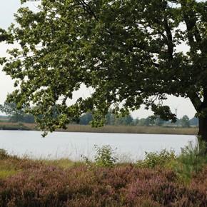 Nährstoffanreicherung im Wollingster See