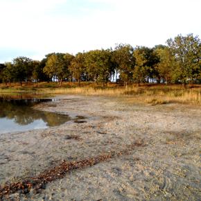 Trockengefallener Uferbereich, Bild: Dr. Rachor